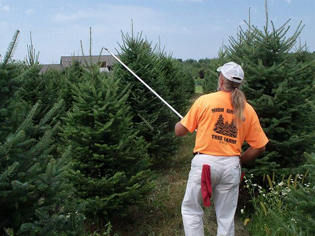 Christmas Tree Producers Part - 24: Custom_2.jpg